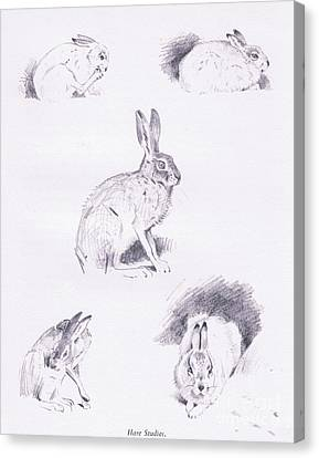 Hare Studies Canvas Print by Archibald Thorburn