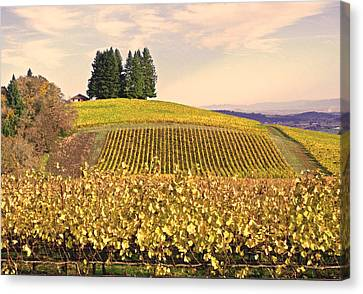 Harvest Time In A Vineyard Canvas Print by Margaret Hood