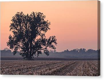 Harvest Tree Canvas Print by Andrea Kappler