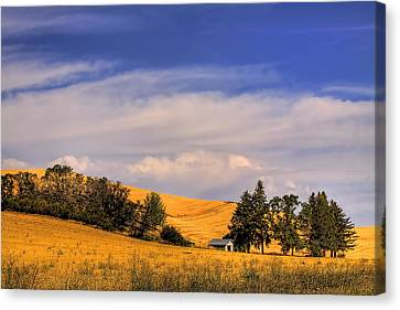 Harvested Canvas Print by David Patterson