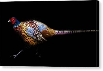 Have A Pheasant Day.. Canvas Print by Martin Newman