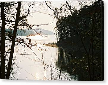 Haven Of Trees Canvas Print by Kicking Bear  Productions