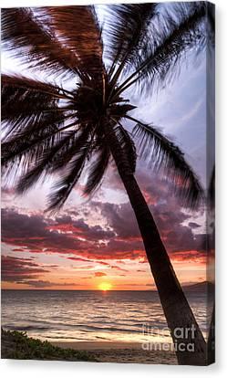 Hawaiian Coconut Palm Sunset Canvas Print by Dustin K Ryan