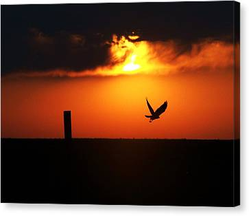 Hawk Rising With The Sun Canvas Print by Clarice  Lakota