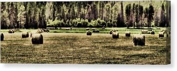 Hay Harvest Canvas Print by David Patterson