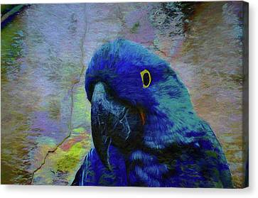 He Just Cracks Me Up Canvas Print by Jan Amiss Photography