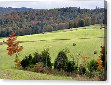 Heart Of The Country Canvas Print by Jan Amiss Photography