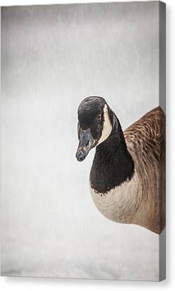 Hello There Canvas Print by Karol Livote