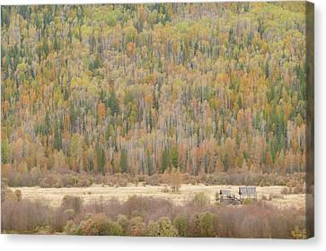 Hemp Creek Autumn Canvas Print by Dave Belcher