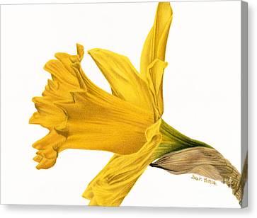 Herald Of Spring Canvas Print by Sarah Batalka
