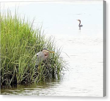 Heron And Cormorant Canvas Print by Al Powell Photography USA
