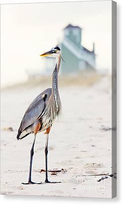 Heron And The Beach House Canvas Print by Joan McCool