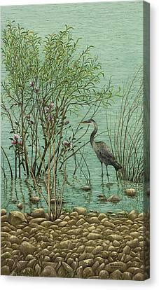 Heron At Crabtree Creek Canvas Print by Mary Ann King