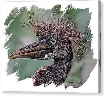 Heron Nestling Canvas Print by Larry Linton
