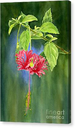 Hibiscus Chinese Red Lantern With Background Canvas Print by Sharon Freeman