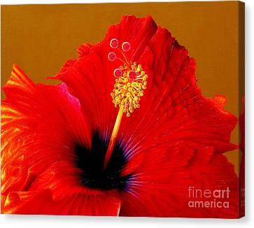 Hibiscus Canvas Print by Jurek Zamoyski