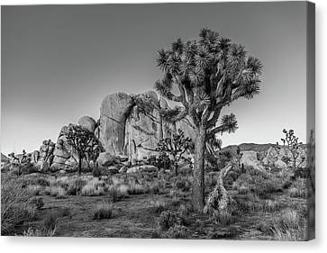 Hidden Valley Rock Canvas Print by Peter Tellone