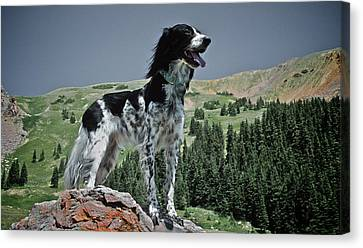 High Country, English Setter Canvas Print by Flying Z Photography By Zayne Diamond