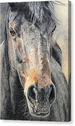 High Desert  Canvas Print by Joanne Stevens