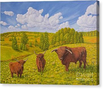 Highland Cattle Pasture Canvas Print by Veikko Suikkanen