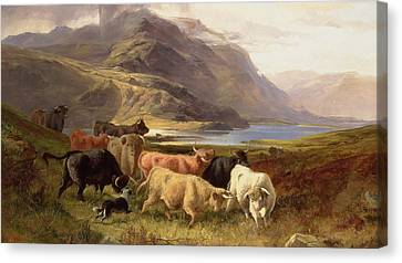 Highland Cattle With A Collie Canvas Print by Joseph Adam