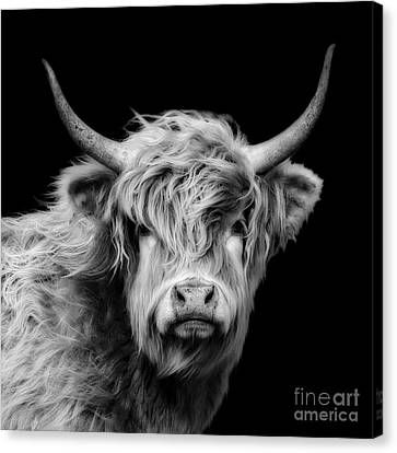 Highland Coo Canvas Print by Linsey Williams
