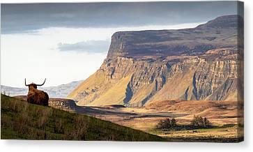 Highland Coo With A View Canvas Print by Dave Bowman