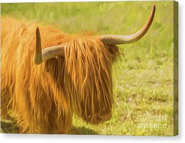 Highland Cow Canvas Print by Veikko Suikkanen