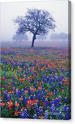 Hill Country Mist - Fs000062 Canvas Print by Daniel Dempster