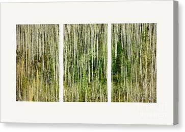 Hillside Forest Canvas Print by Priska Wettstein
