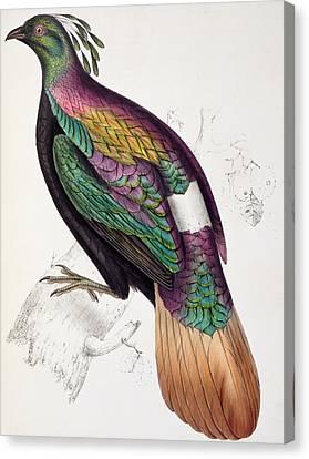 Himalayan Monal Pheasant Canvas Print by John Gould