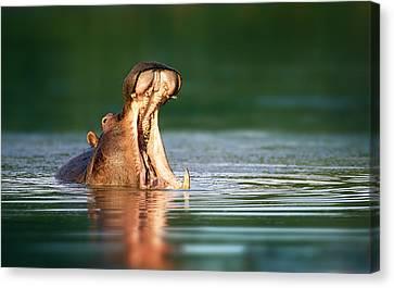 Hippopotamus Canvas Print by Johan Swanepoel