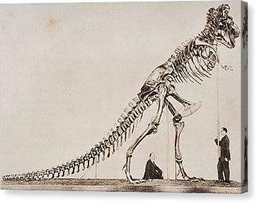 Historical Illustration Of Dinosaur Canvas Print by Vintage Design Pics