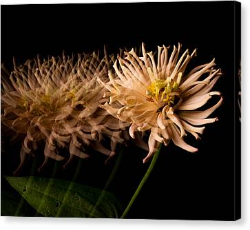 Hold Still Canvas Print by Don Spenner