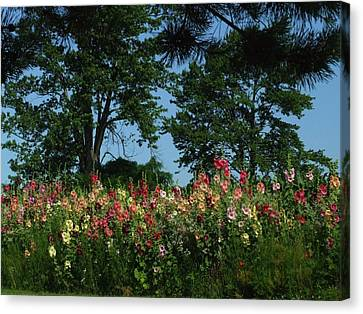 Hollyhocks And Trees Canvas Print by Michael L Kimble