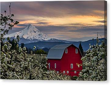 Hood River Pear Orchard Canvas Print by Exquisite Oregon