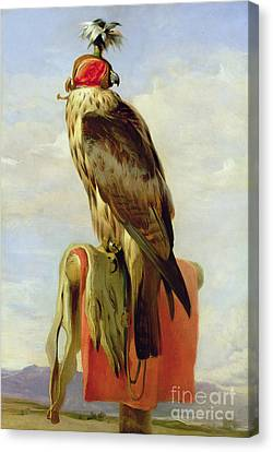 Hooded Falcon Canvas Print by Sir Edwin Landseer