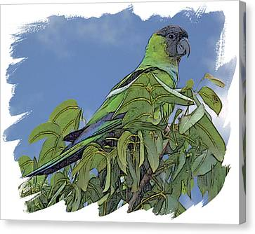 Hooded Parakeet Canvas Print by Larry Linton