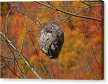 Hornet's Nest Canvas Print by HH Photography of Florida