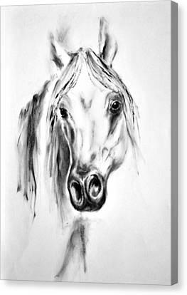 Arabian Horse 2 By Diana Van Canvas Print by Diana Van