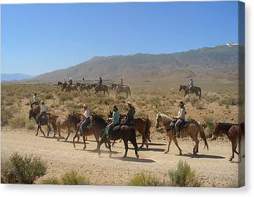 Horse Drive From June Lake To Bishop California Canvas Print by Christine Till