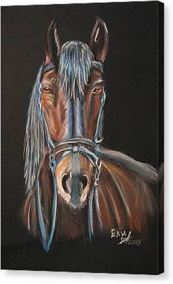 Horse Canvas Print by Eli Marinova