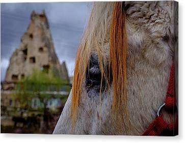 Horse Eye -2  Canvas Print by Okan YILMAZ