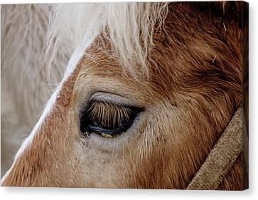 Horse Eye Canvas Print by Okan YILMAZ