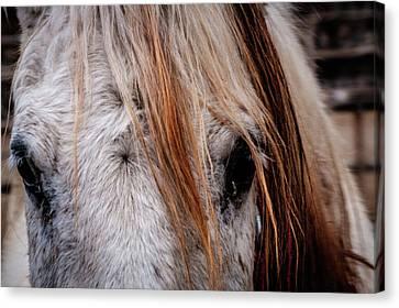 Horse Eyes Canvas Print by Okan YILMAZ