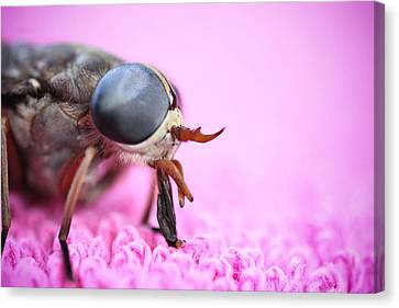 Horse Fly Canvas Print by Ryan Kelly