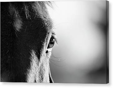 Horse In Black And White Canvas Print by Malcolm MacGregor