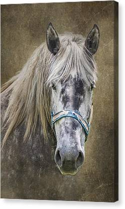 Horse Portrait I Canvas Print by Tom Mc Nemar