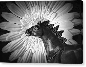 Horse Startled By A Daisy Canvas Print by Jeff  Gettis