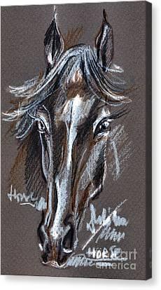 Horse Study Canvas Print by Daliana Pacuraru